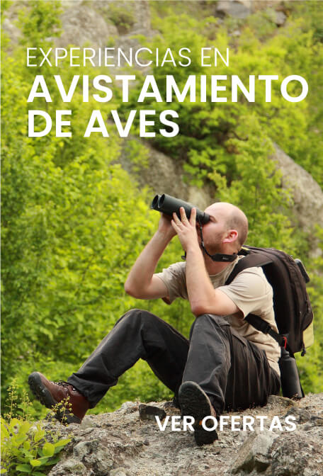 Promociones viajesvip.com.co